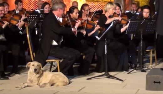 オーケストラの演奏中「犬が乱入」くつろぐ様子が話題に