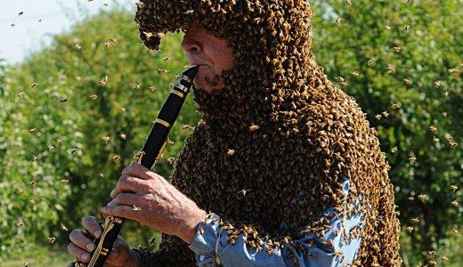 【閲覧注意】蜂を愛するクラリネット奏者ノウム・ゲイリー氏